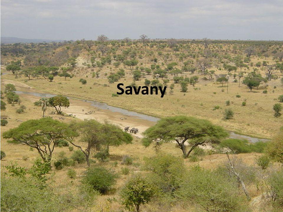 Oblasti porostlé travou, řídce stromy Rozdělujeme: a) suché b) vlhké c) zaplavované Úkol: Přiřaď charakteristiky k typům savan.