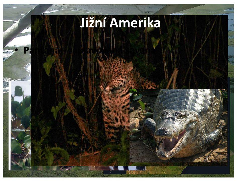 Jižní Amerika Pantanal- zaplavovaná savana