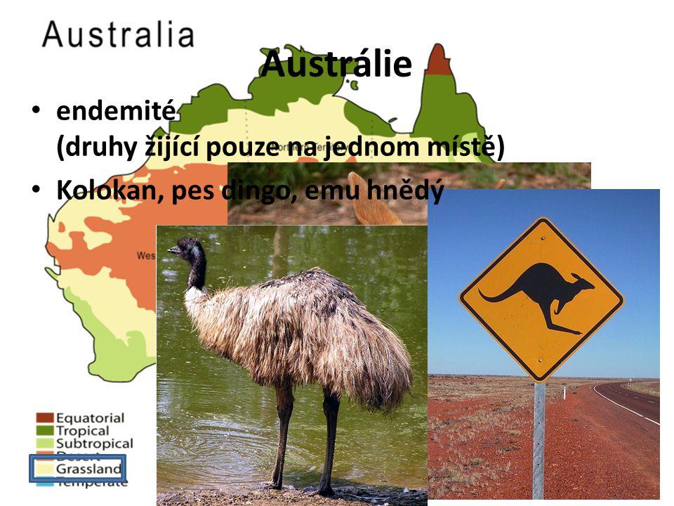 Austrálie endemité (druhy žijící pouze na jednom místě) Kolokan, pes dingo, emu hnědý