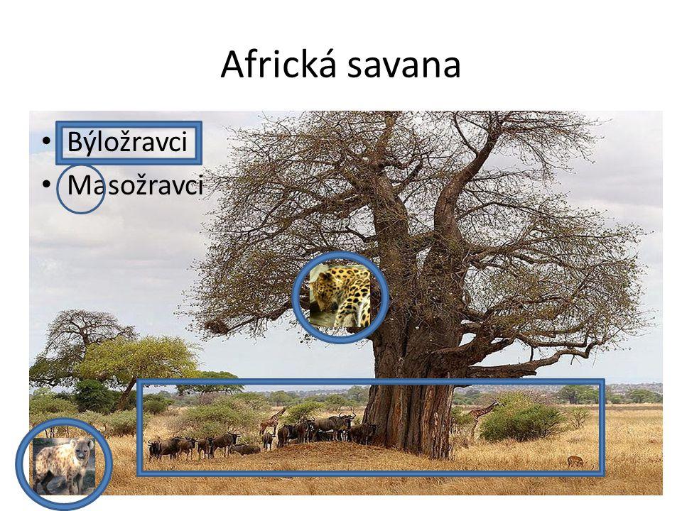 Národní parky(NP) Afriky 1.NP Serengeti = stát.