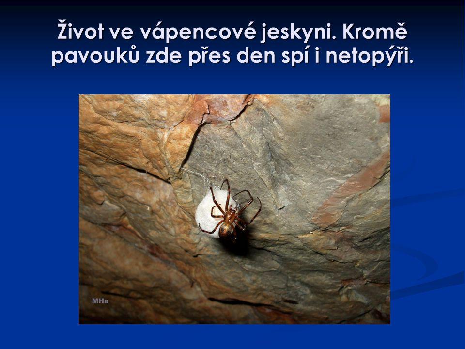 Život ve vápencové jeskyni. Kromě pavouků zde přes den spí i netopýři.