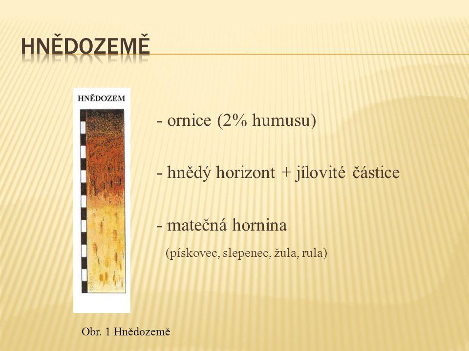- ornice (2% humusu) - hnědý horizont + jílovité částice - matečná hornina (pískovec, slepenec, žula, rula) Obr.