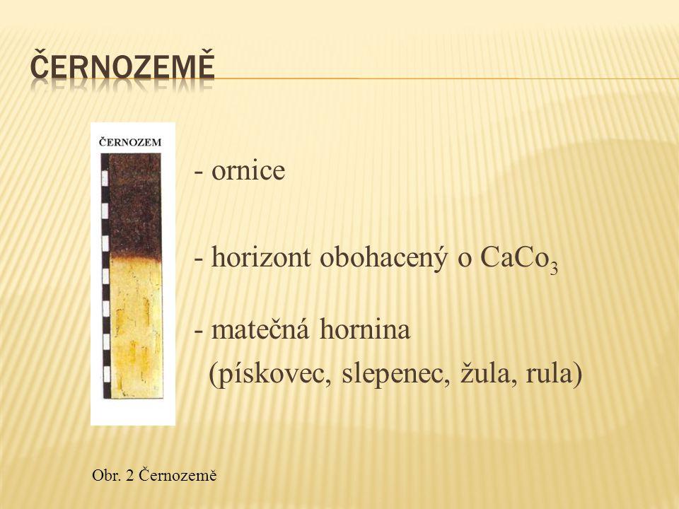 - ornice - horizont obohacený o CaCo 3 - matečná hornina (pískovec, slepenec, žula, rula) Obr.