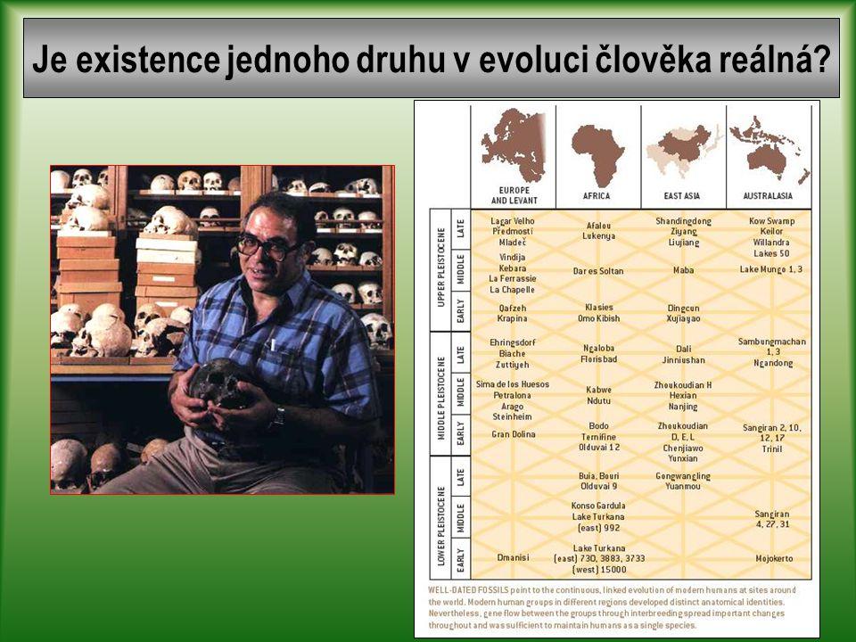 Teorie vzniku a diferenciace moderního člověka Vysoká druhová i populační diversita Vysoká populační diversita Nízká speciace