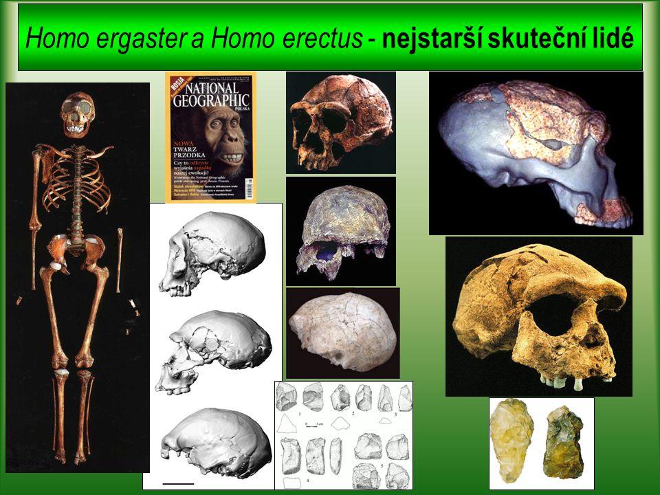 Je existence jednoho druhu v evoluci člověka reálná?