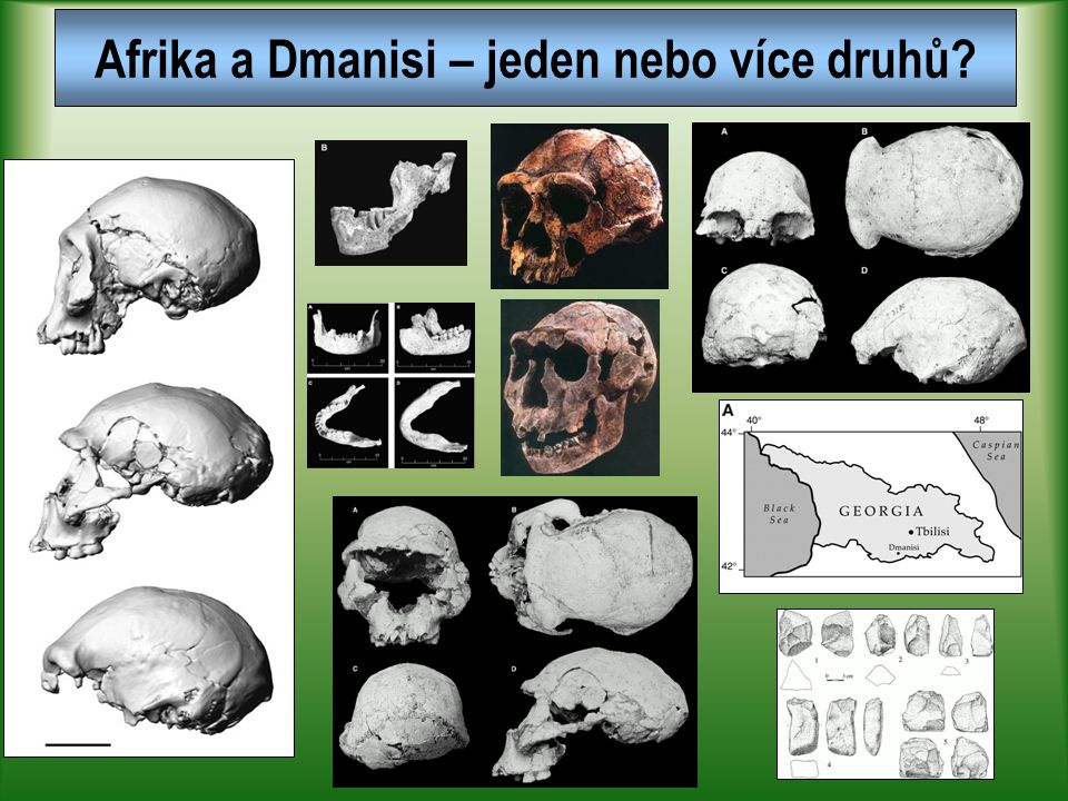 Afrika a Dmanisi – jeden nebo více druhů?