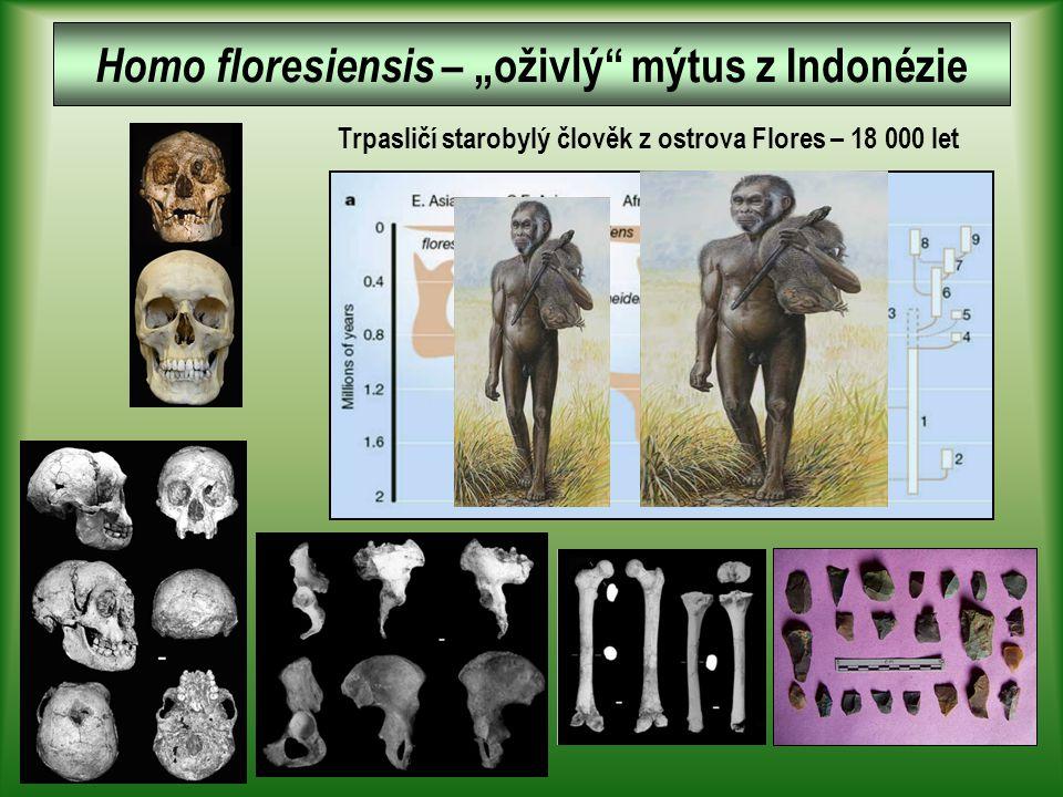 """Trpasličí starobylý člověk z ostrova Flores – 18 000 let Homo floresiensis – """"oživlý mýtus z Indonézie"""