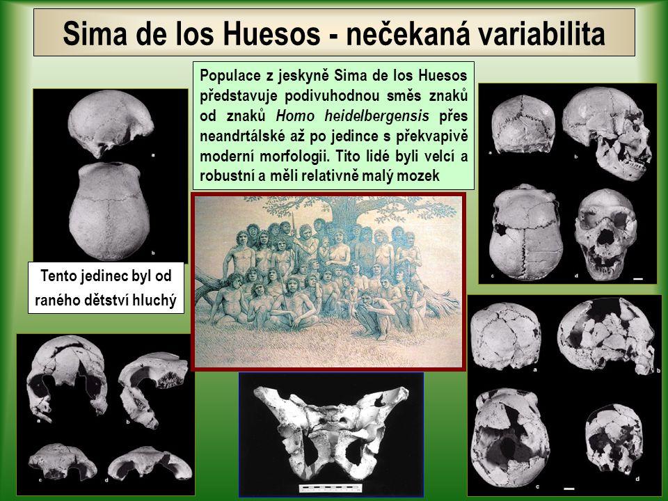 Homo heidelbergensis - archaický Homo sapiens Rozvoj materiální kultury a kamenné technologie Evropu ovládá pokročilý ašelén Homo heidelbergensis se stává prvním opravdovým lovcem