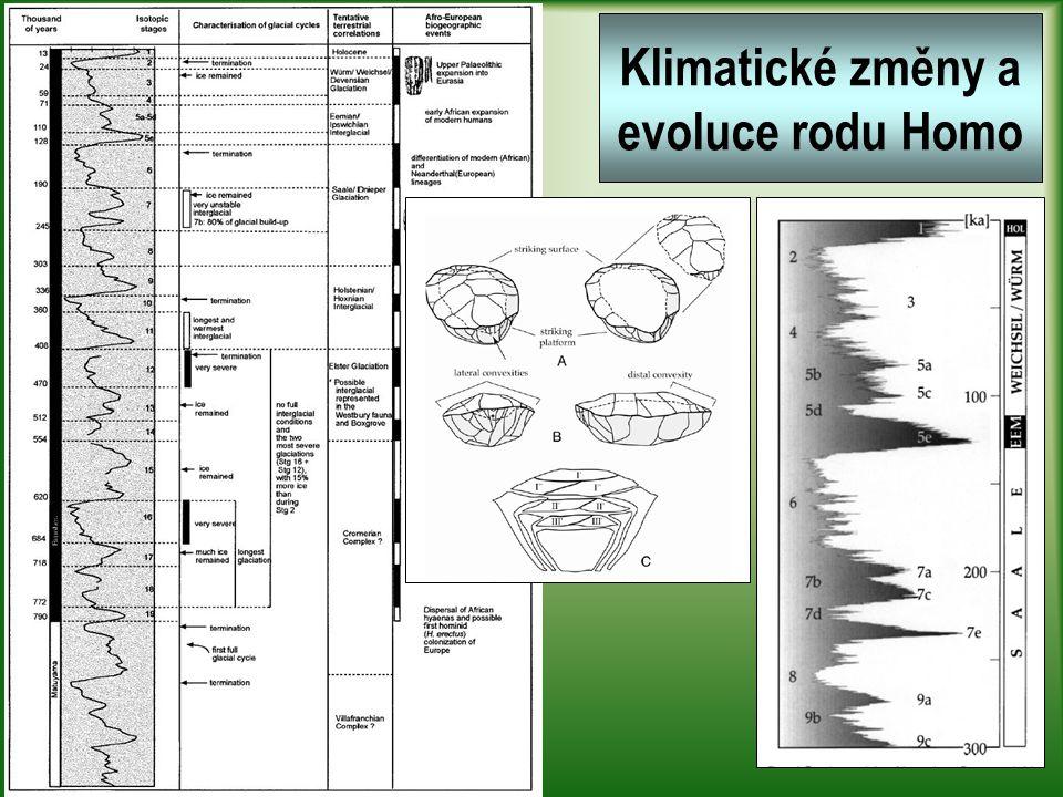 Steinheim (a Swanscombe) mladší formy archaického H.