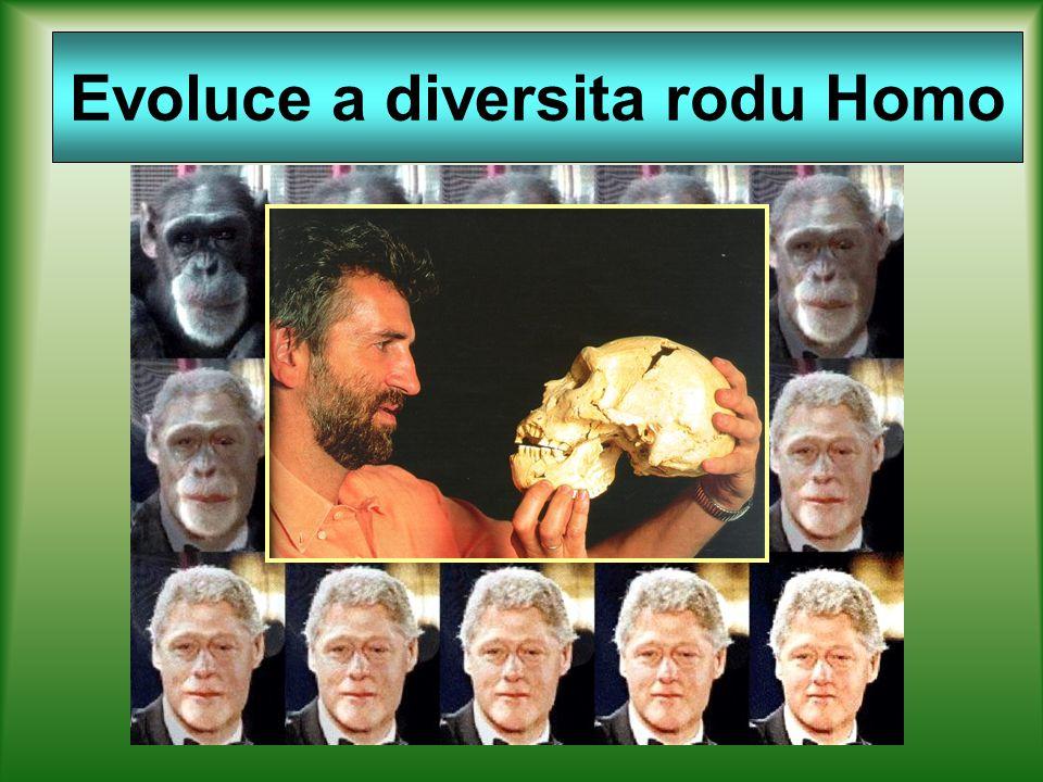 Evoluce a diversita rodu Homo