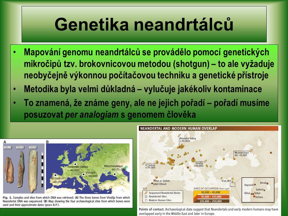 Genetika neandrtálců Mapování genomu neandrtálců se provádělo pomocí genetických mikročipů tzv.