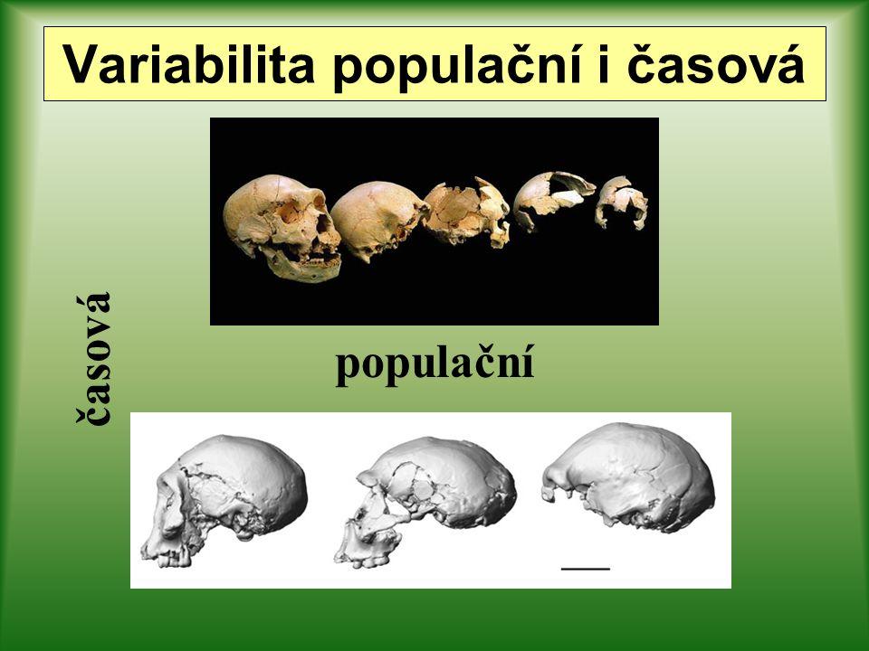 populační časová Variabilita populační i časová