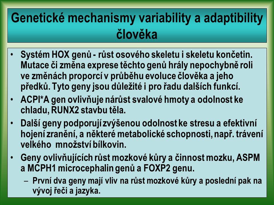 Genetické mechanismy variability a adaptibility člověka Systém HOX genů - růst osového skeletu i skeletu končetin.