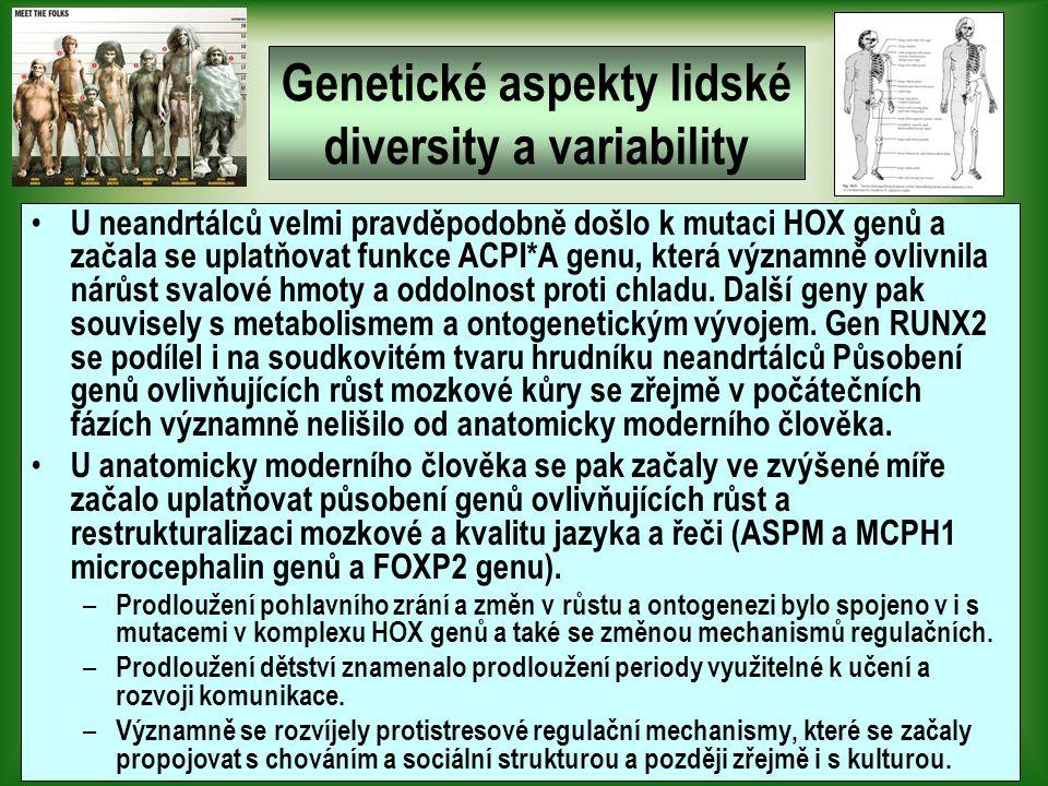 Genetické aspekty lidské diversity a variability U neandrtálců velmi pravděpodobně došlo k mutaci HOX genů a začala se uplatňovat funkce ACPI*A genu, která významně ovlivnila nárůst svalové hmoty a oddolnost proti chladu.