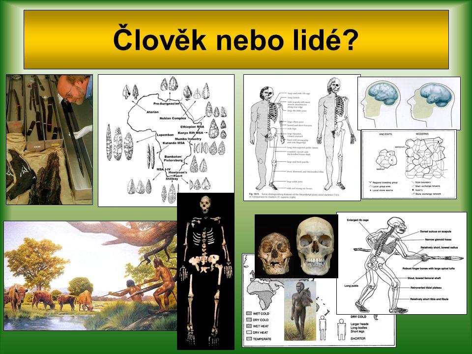 Geny, regulace a kultura u AMČ Tento komplex změn definitivně přeměnil anatomicky moderního člověka v důsledně biosociální bytost.