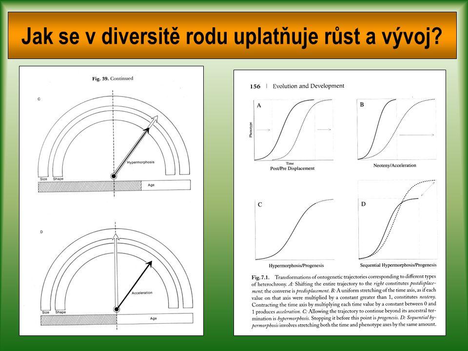 Jak se v diversitě rodu uplatňuje růst a vývoj?