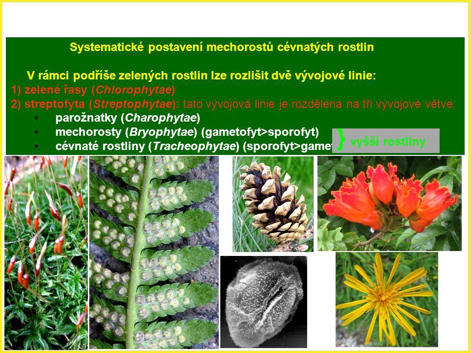 Systematické postavení mechorostů cévnatých rostlin V rámci podříše zelených rostlin lze rozlišit dvě vývojové linie: 1) zelené řasy (Chlorophytae) 2)
