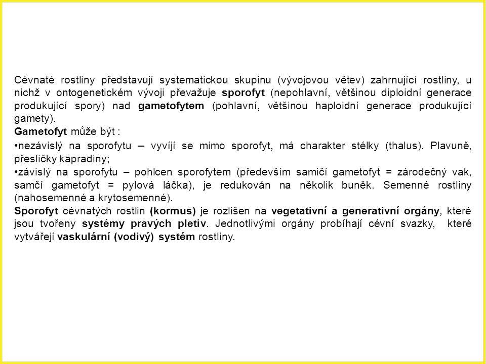 Charakteristika cévnatých rostlin (Tracheophytae) Cévnaté rostliny představují systematickou skupinu (vývojovou větev) zahrnující rostliny, u nichž v