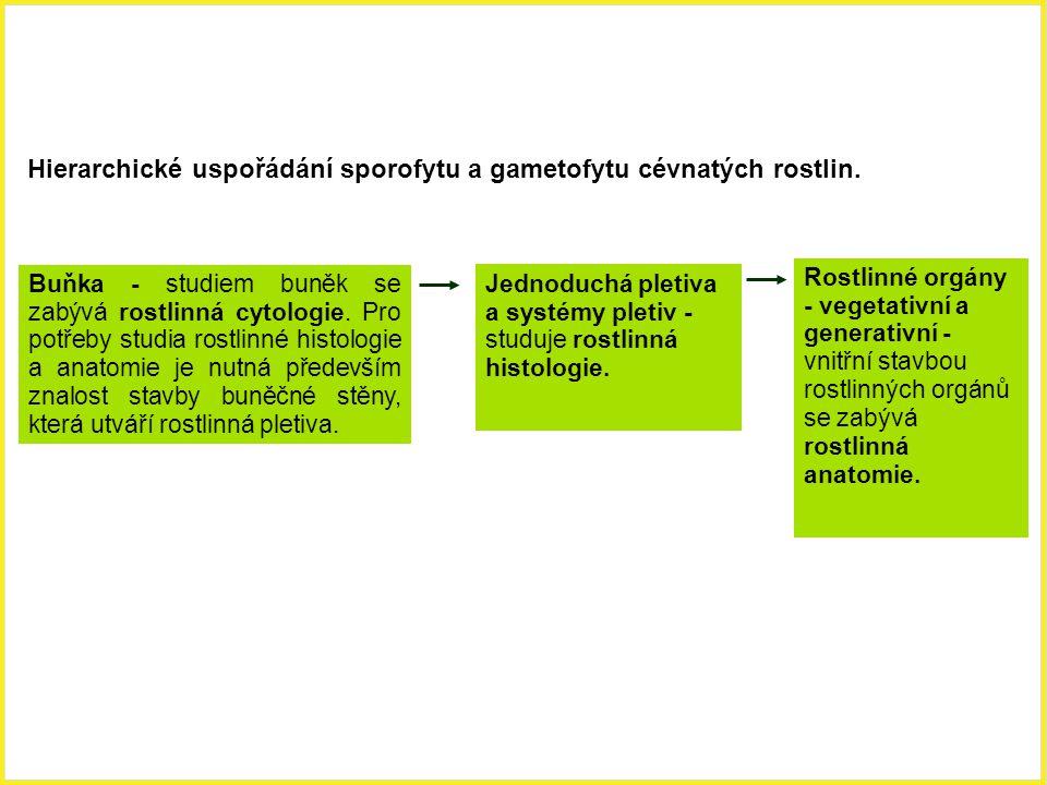 Hierarchické uspořádání sporofytu a gametofytu cévnatých rostlin. Buňka - studiem buněk se zabývá rostlinná cytologie. Pro potřeby studia rostlinné hi