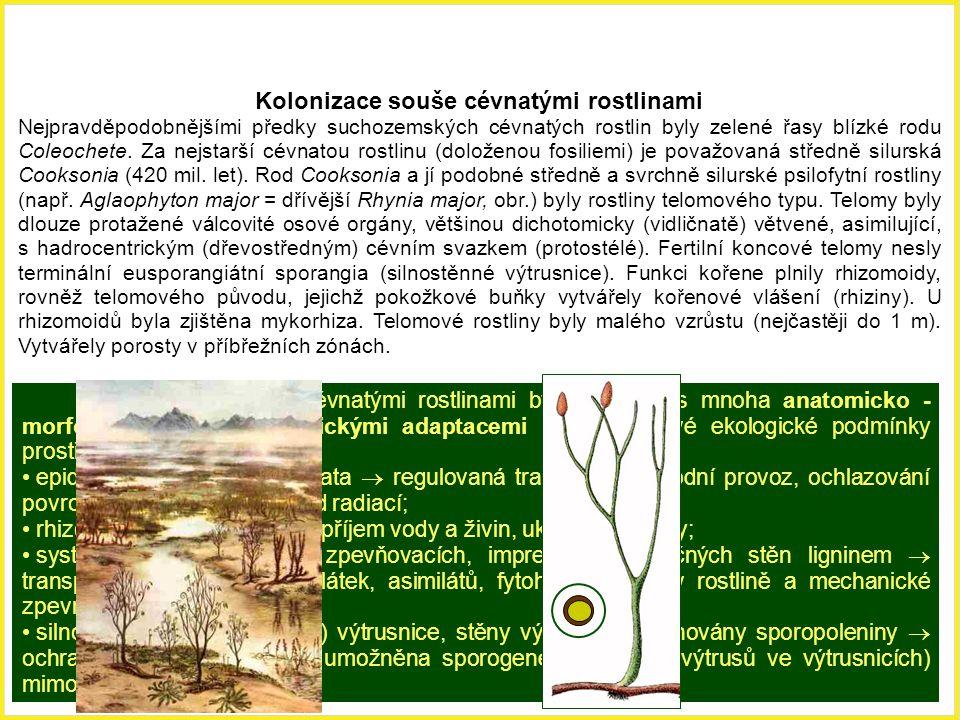 Kolonizace souše cévnatými rostlinami Nejpravděpodobnějšími předky suchozemských cévnatých rostlin byly zelené řasy blízké rodu Coleochete. Za nejstar