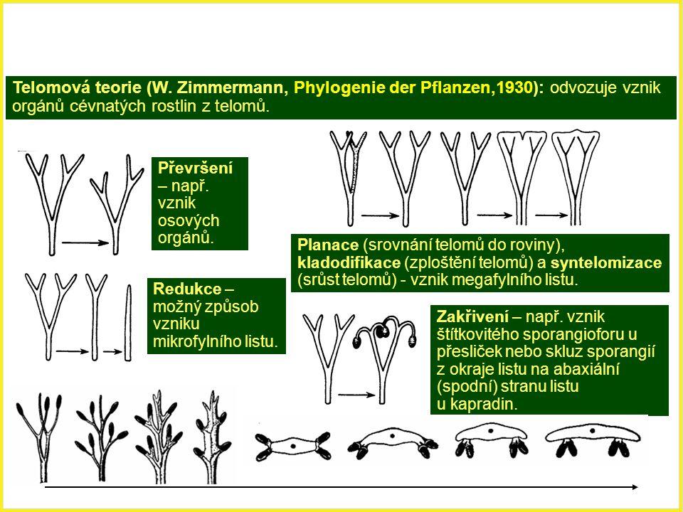 Telomová teorie (W. Zimmermann, Phylogenie der Pflanzen,1930): odvozuje vznik orgánů cévnatých rostlin z telomů. Převršení – např. vznik osových orgán