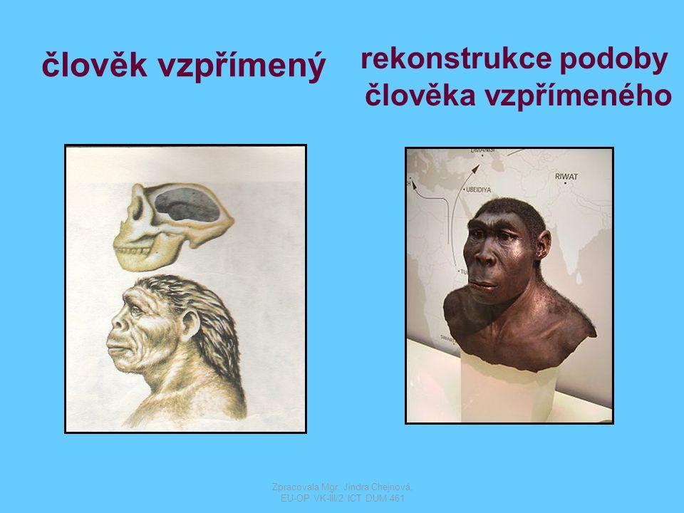 člověk rozumný homo sapiens Zpracovala Mgr. Jindra Chejnová, EU-OP VK-III/2 ICT DUM 461