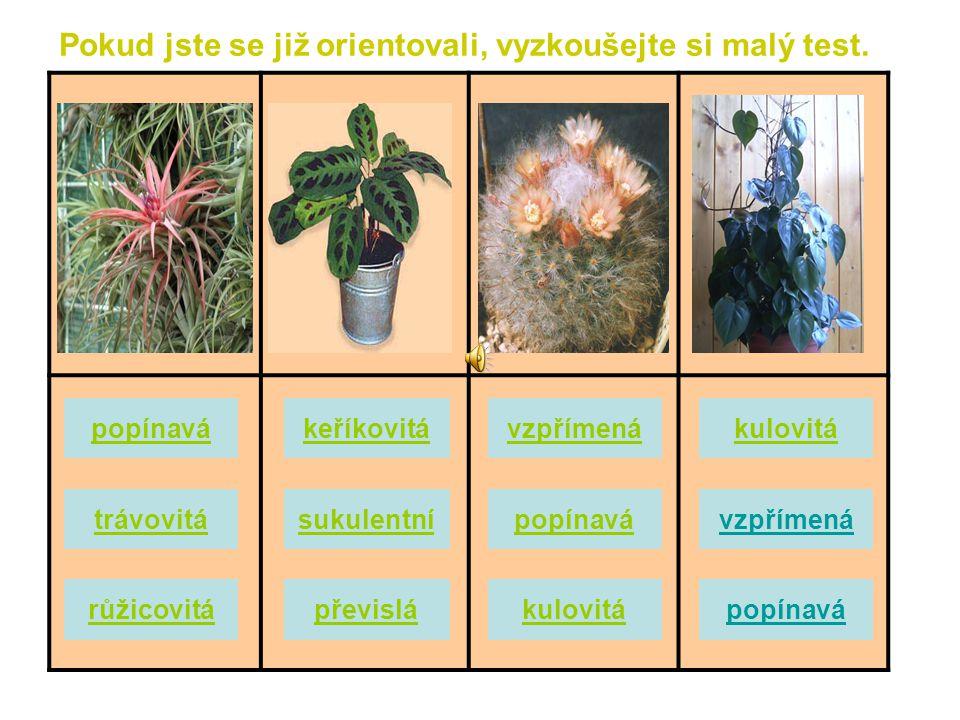 Kulovité rostliny - Nemají listy a jejich tvar je zřetelně kulovitý. Vesměs jde o kaktusy, jejichž tělo může být na povrchu hladké nebo je pokryté ost