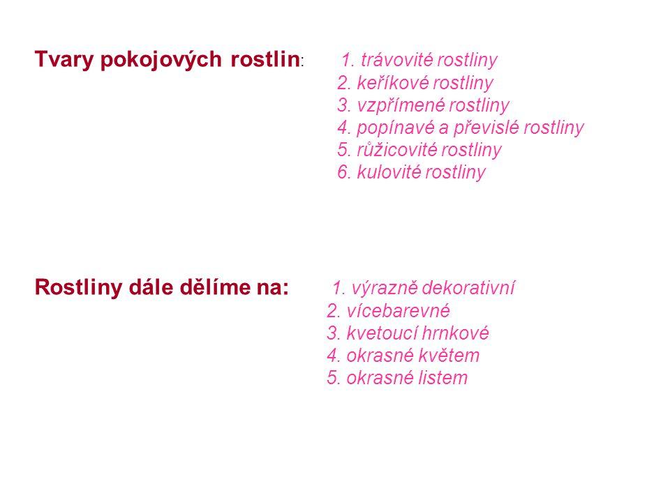 Pokojové rostliny Jana Novotná