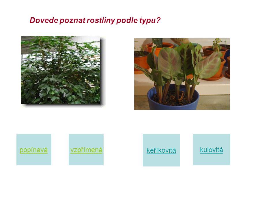 Tvary pokojových rostlin : 1. trávovité rostliny 2. keříkové rostliny 3. vzpřímené rostliny 4. popínavé a převislé rostliny 5. růžicovité rostliny 6.