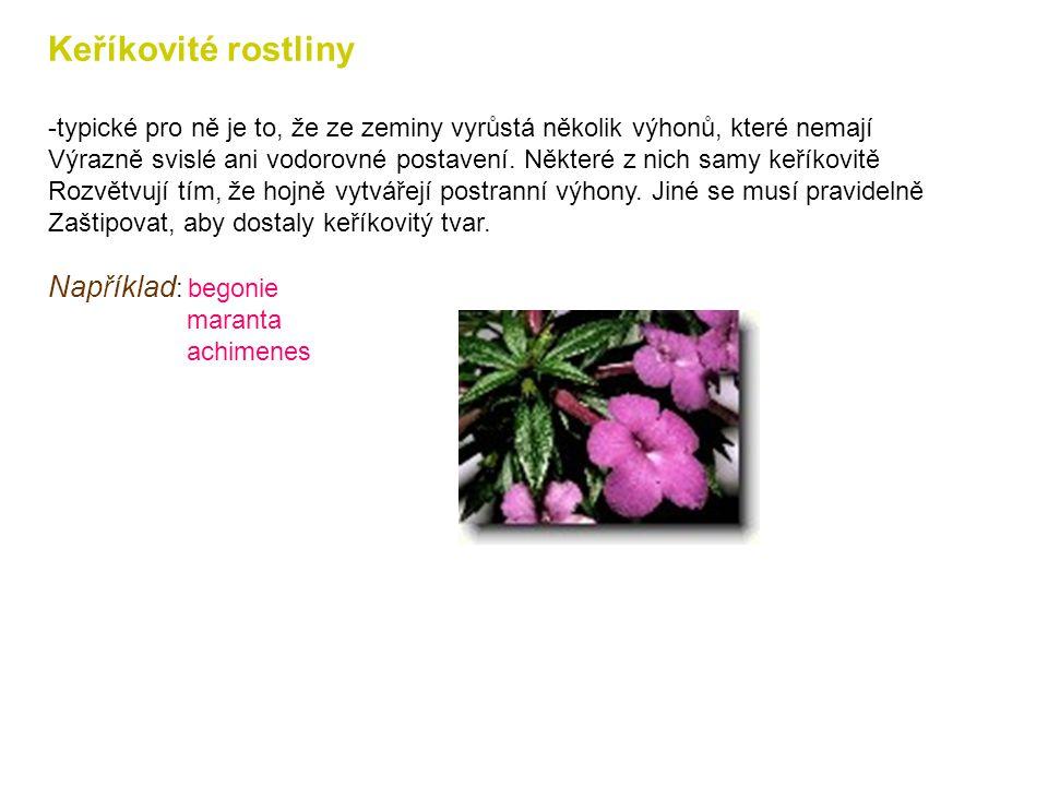 Přehled některých tvarů pokojových rostlin Trávovité rostliny -mají dlouhé a úzké listy a svým vzhledem připomínají trávy. Pravé trávy se zřídkakdy na