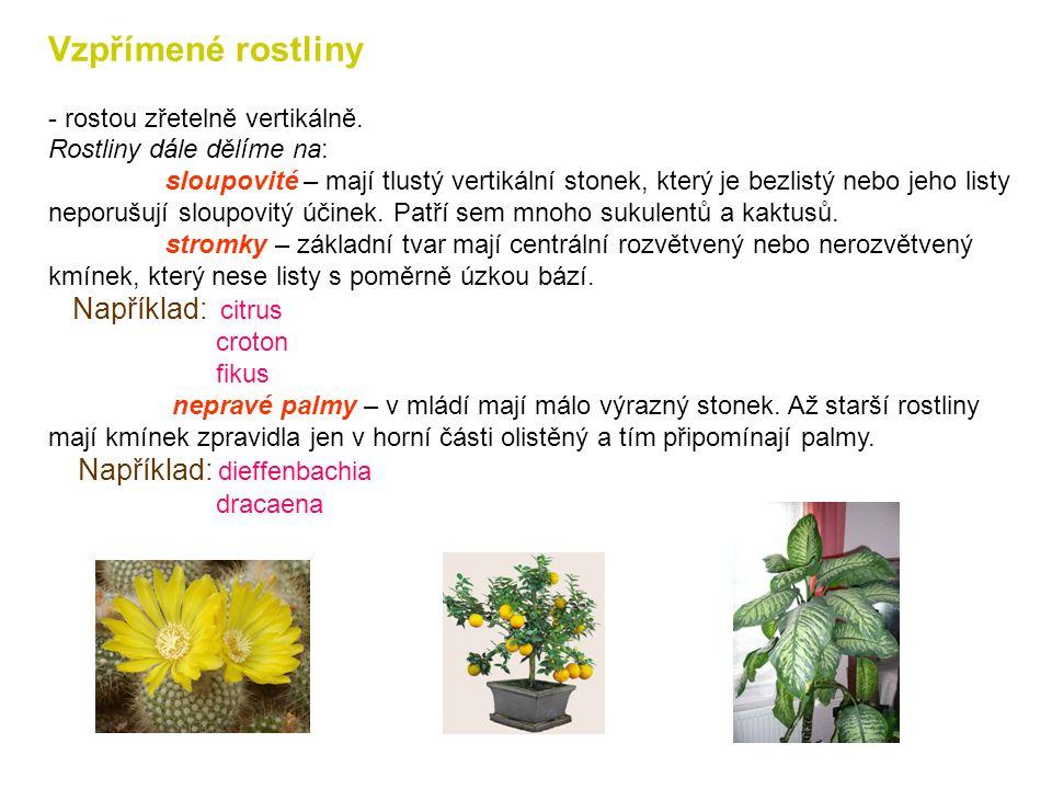 Keříkovité rostliny -typické pro ně je to, že ze zeminy vyrůstá několik výhonů, které nemají Výrazně svislé ani vodorovné postavení. Některé z nich sa