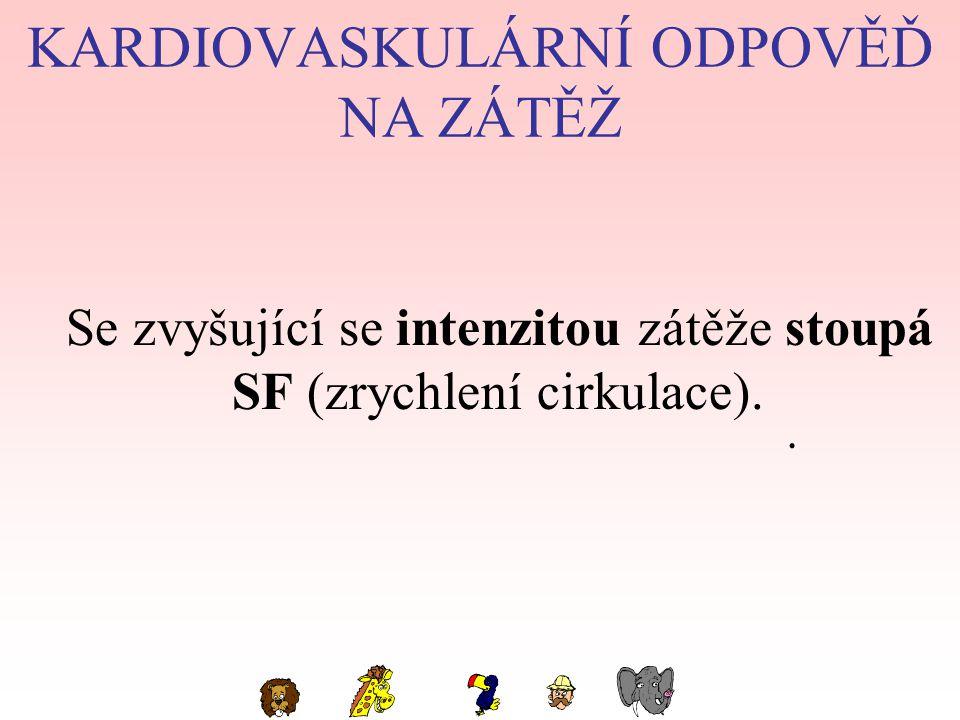 KARDIOVASKULÁRNÍ ODPOVĚĎ NA ZÁTĚŽ Se zvyšující se intenzitou zátěže stoupá SF (zrychlení cirkulace)..