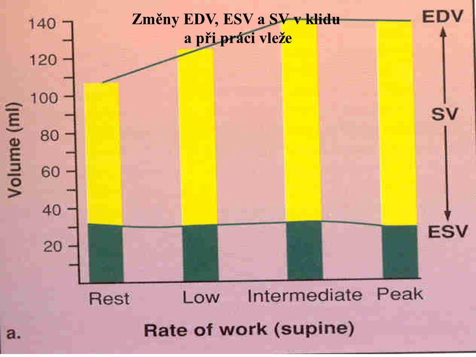 Změny EDV, ESV a SV v klidu a při práci vleže