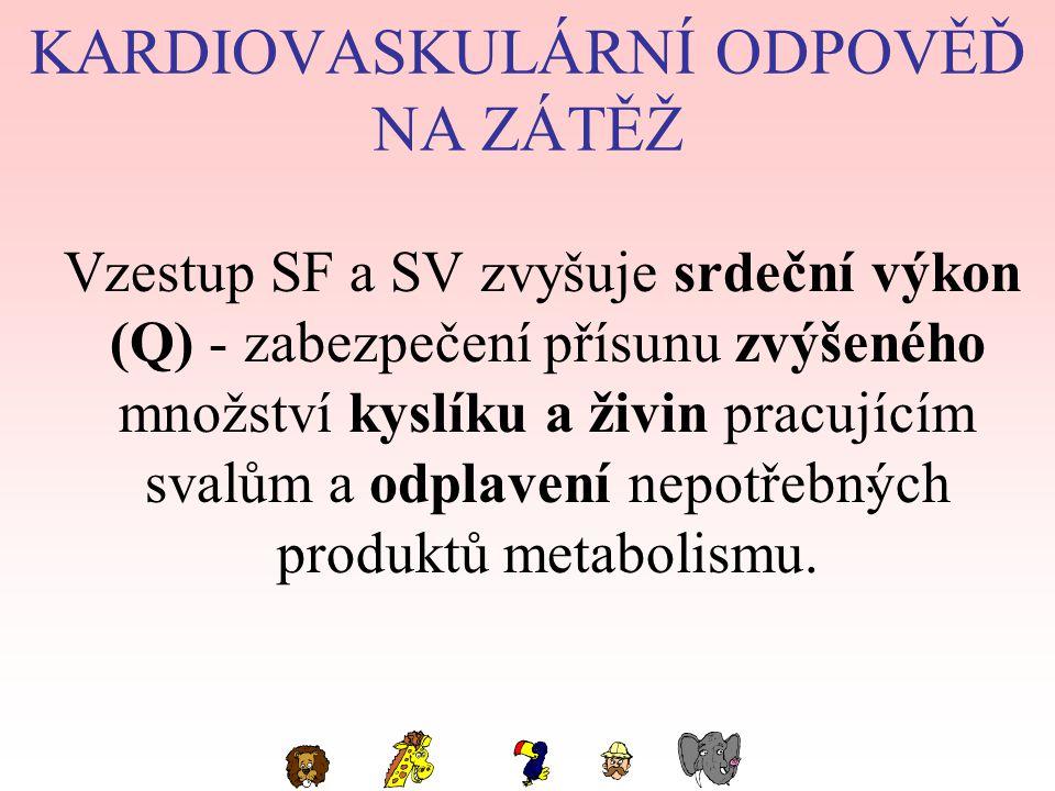 KARDIOVASKULÁRNÍ ODPOVĚĎ NA ZÁTĚŽ Vzestup SF a SV zvyšuje srdeční výkon (Q) - zabezpečení přísunu zvýšeného množství kyslíku a živin pracujícím svalům a odplavení nepotřebných produktů metabolismu..