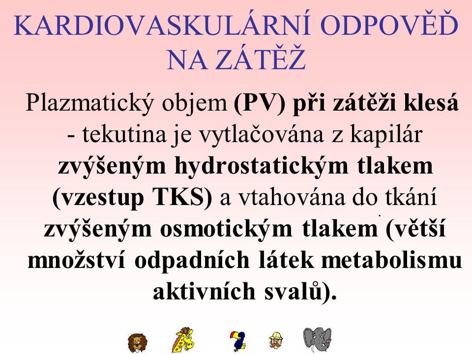 KARDIOVASKULÁRNÍ ODPOVĚĎ NA ZÁTĚŽ Plazmatický objem (PV) při zátěži klesá - tekutina je vytlačována z kapilár zvýšeným hydrostatickým tlakem (vzestup TKS) a vtahována do tkání zvýšeným osmotickým tlakem (větší množství odpadních látek metabolismu aktivních svalů)..