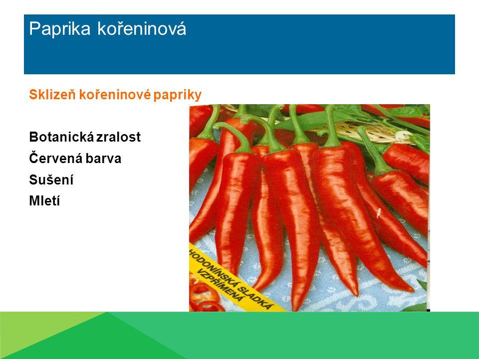 Paprika kořeninová Sklizeň kořeninové papriky Botanická zralost Červená barva Sušení Mletí