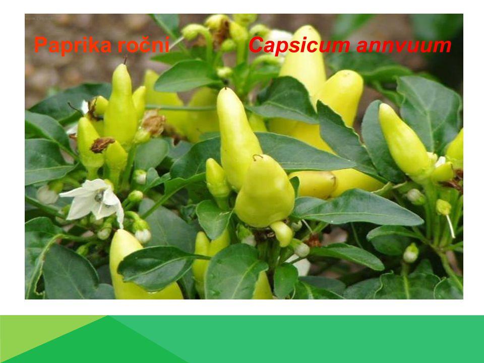 Paprika roční Paprika roční (Capsicum annvuum L.)  Jednoletá  Vzpřímená větvená lodyha  Mělký kořenový systém  Květy nažloutlé, bílé  Plody vzpřímené, převislé  Různé tvary dle odrůdy  Semeno žluté, ledvinovité  Klíčení 13°C