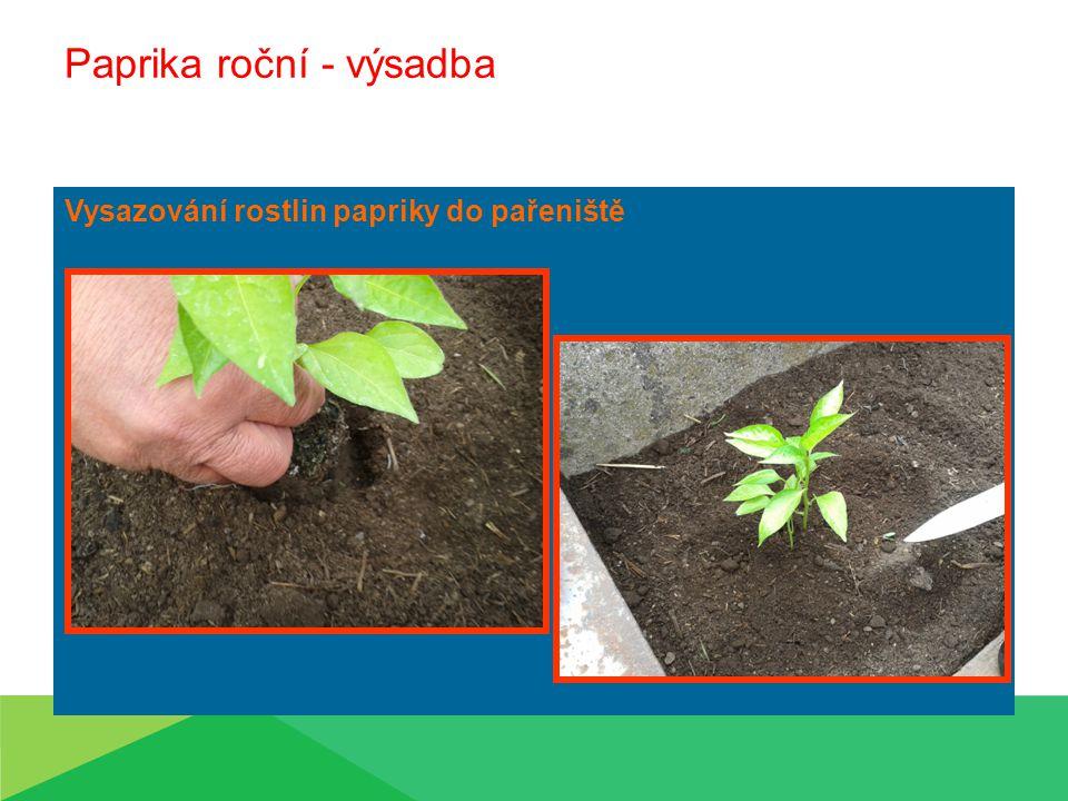 Paprika roční  Sadbovače  Použití herbicidů před výsadbou Výsadba druhá polovina května 0,6 x0,3m po dvou sazenicích  Hlouběji než předpěstovaná  Zálivka ihned po výsadbě Ošetřování během vegetace Kypření Přihrnutí půdy