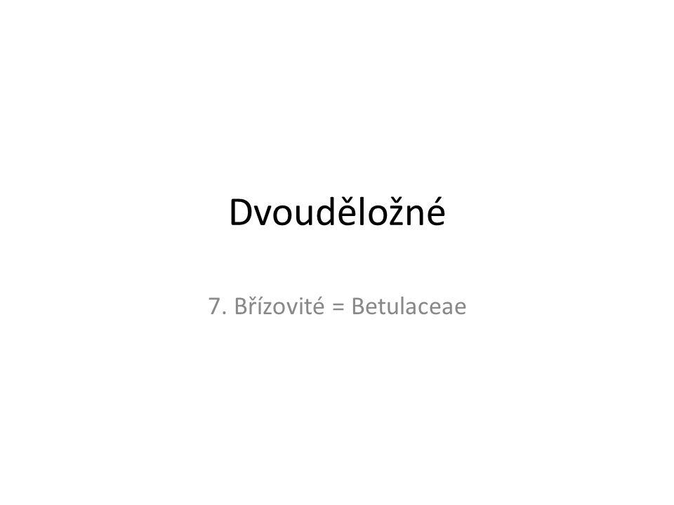 Dvouděložné 7. Břízovité = Betulaceae