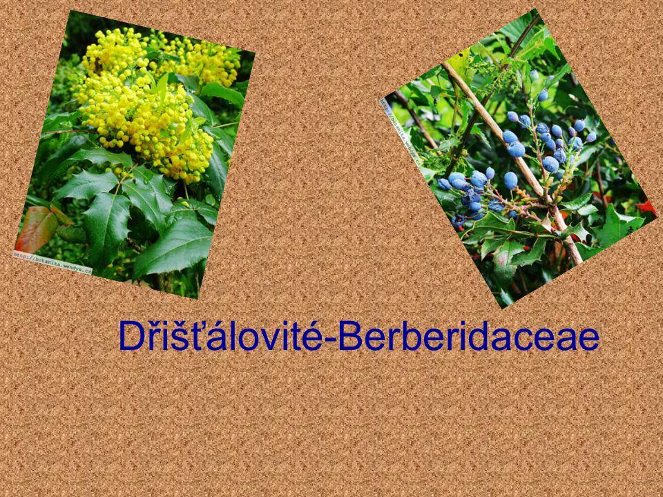 Dřišťálovité-Berberidaceae