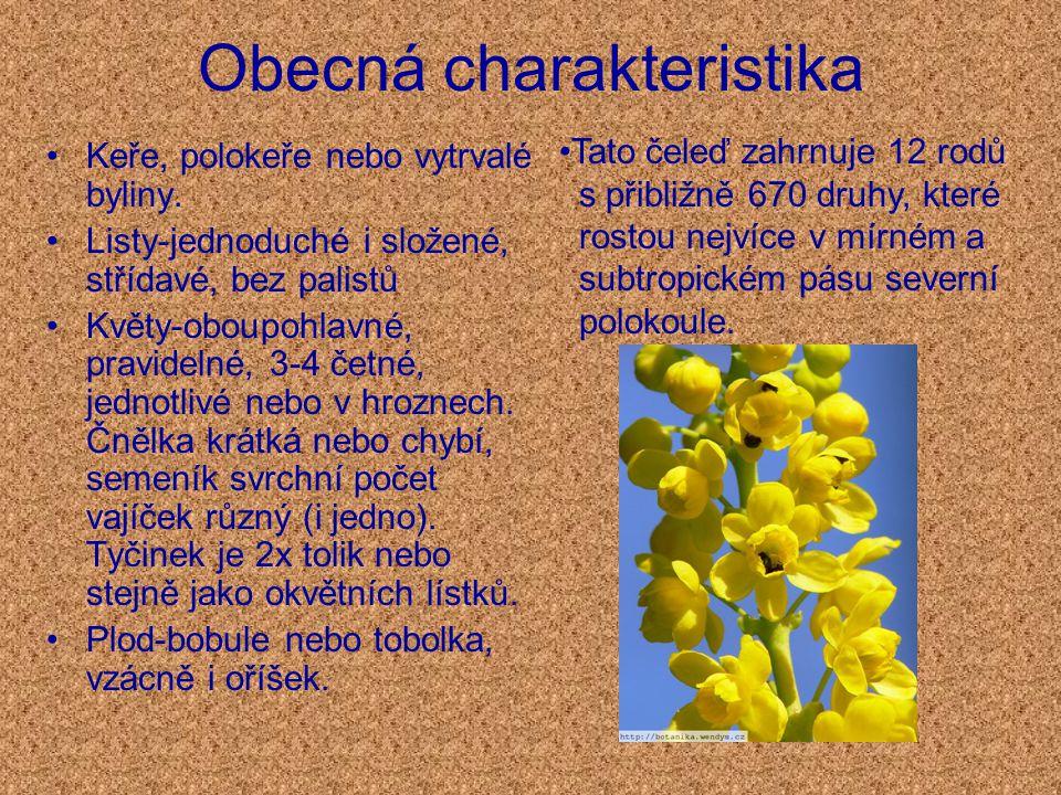 Obecná charakteristika Keře, polokeře nebo vytrvalé byliny.