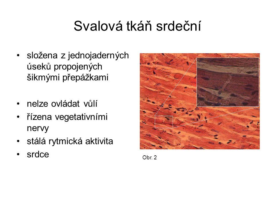 Svalová tkáň srdeční složena z jednojaderných úseků propojených šikmými přepážkami nelze ovládat vůlí řízena vegetativními nervy stálá rytmická aktivi
