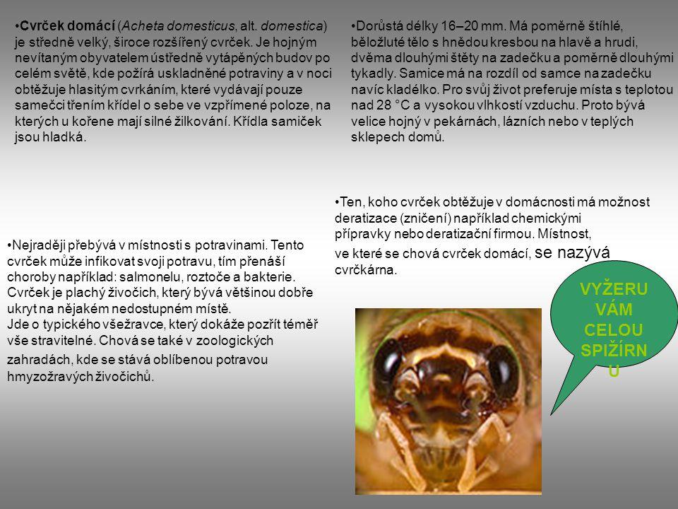 Vědecká klasifikace Binomické jméno: Acheta domestikus Linné, 1758 Říše:živočichovéživočichové (Animalia) Kmen:členovcičlenovci (Arthropoda) Podkmen:šestinozíšestinozí (Hexapoda) Třída:hmyzhmyz (Insecta) Podtřída:křídlatíkřídlatí (Pterygota) Řád:rovnokřídlírovnokřídlí (Orthoptera) Podřád:kobylkykobylky (Ensifera) Nadčeleď:cvrčcicvrčci (Grylloidea) Čeleď:cvrčkovitícvrčkovití (Gryllidae) Rod:cvrčekcvrček (Acheta)