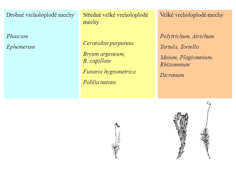 Drobné vrcholoplodé mechy Phascum Ephemerum Středně velké vrcholoplodé mechy Ceratodon purpureus Bryum argeneum, B. capillare Funaria hygrometrica Poh