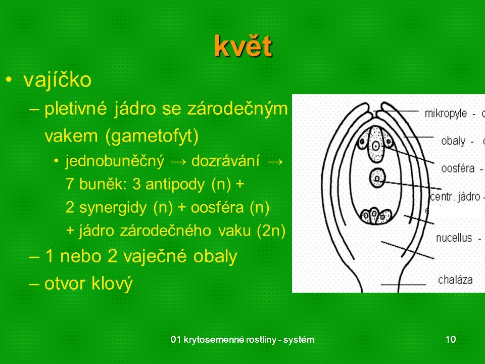 01 krytosemenné rostliny - systém1001 krytosemenné rostliny - systém10 květ vajíčko –pletivné jádro se zárodečným vakem (gametofyt) jednobuněčný → dozrávání → 7 buněk: 3 antipody (n) + 2 synergidy (n) + oosféra (n) + jádro zárodečného vaku (2n) –1 nebo 2 vaječné obaly –otvor klový