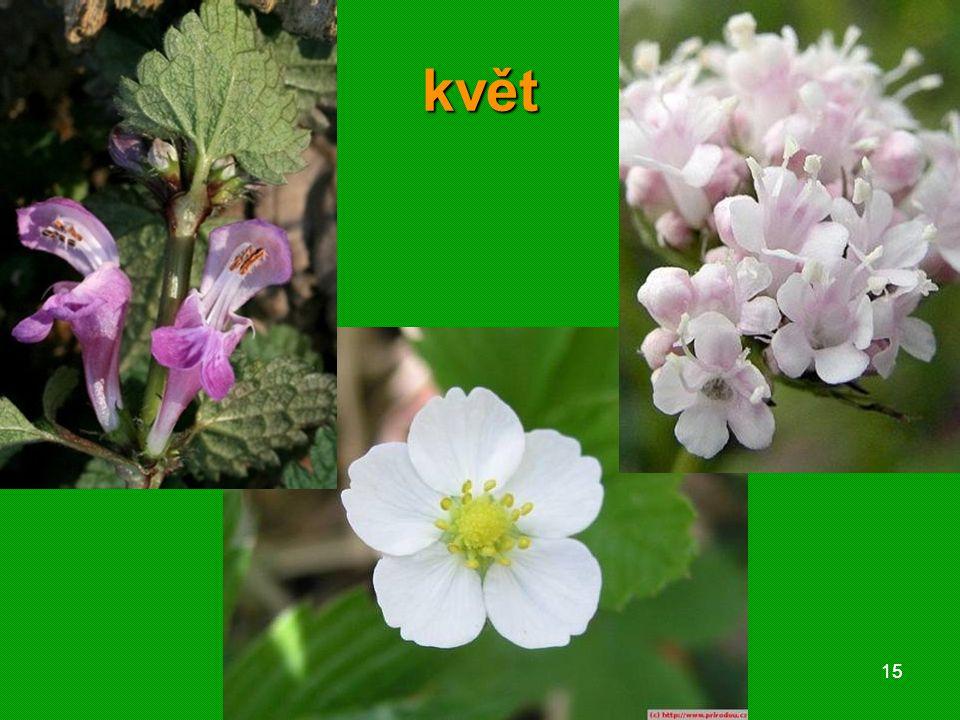 01 krytosemenné rostliny - systém1501 krytosemenné rostliny - systém15 květ