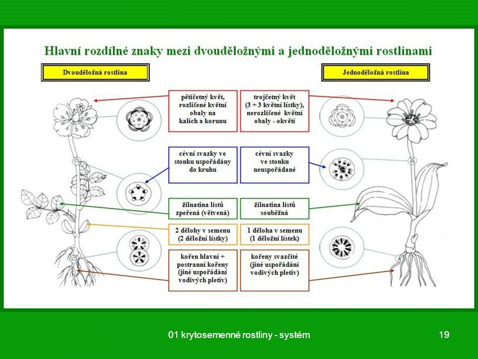 01 krytosemenné rostliny - systém1901 krytosemenné rostliny - systém19