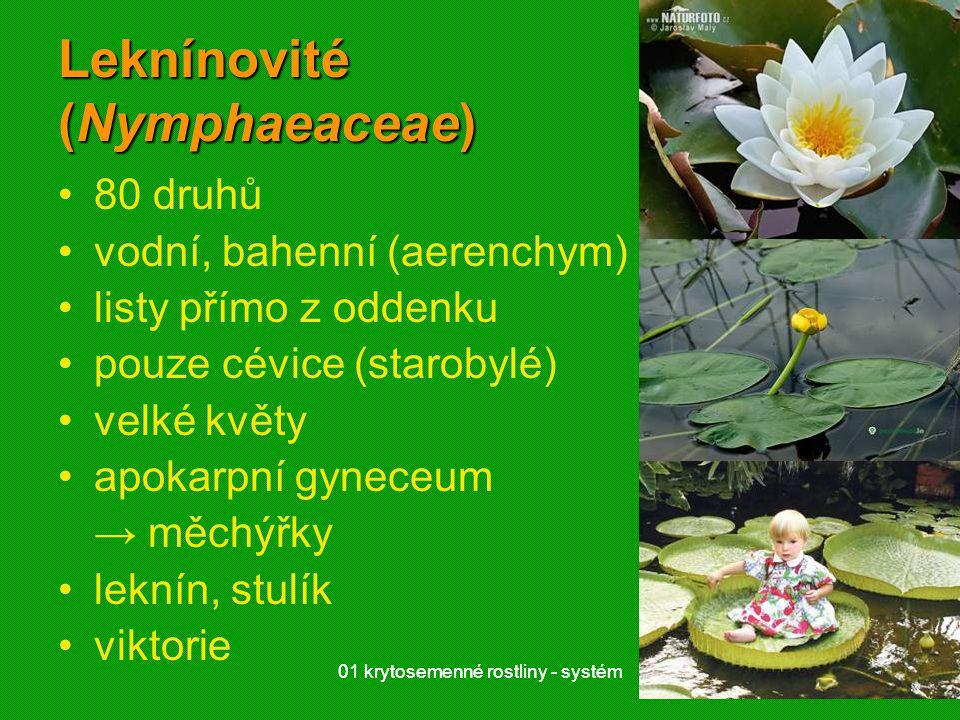 01 krytosemenné rostliny - systém2101 krytosemenné rostliny - systém21 Leknínovité (Nymphaeaceae) 80 druhů vodní, bahenní (aerenchym) listy přímo z od