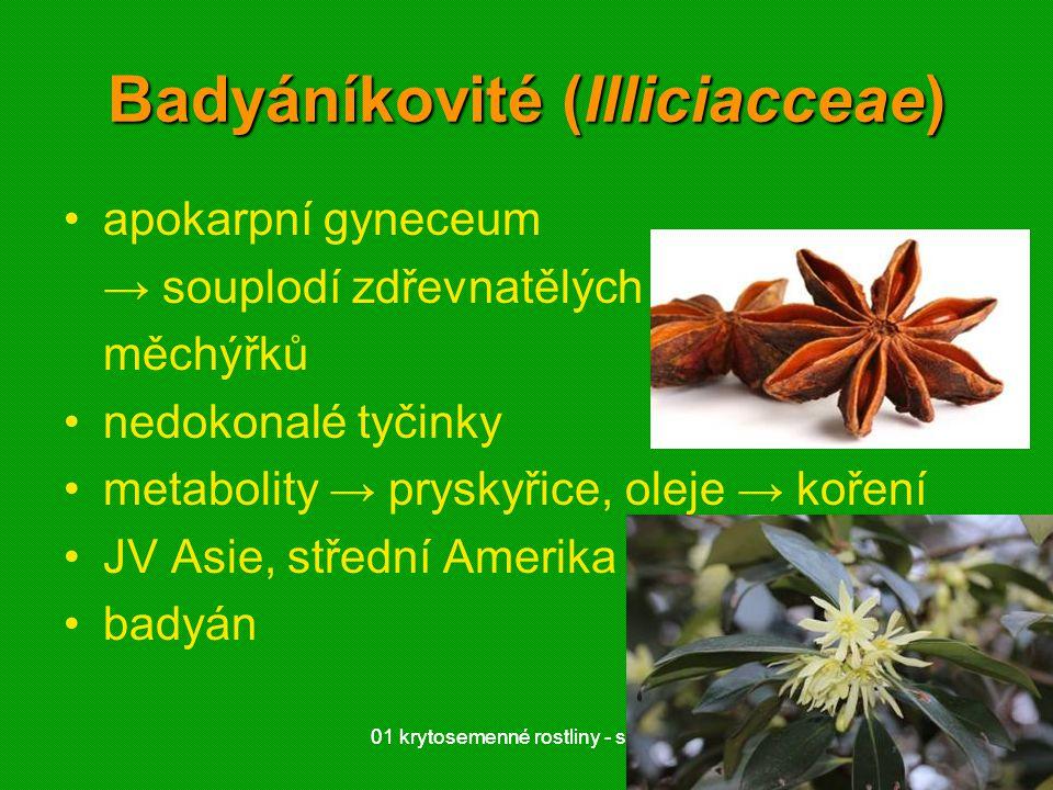 01 krytosemenné rostliny - systém2201 krytosemenné rostliny - systém22 Badyáníkovité (Illiciacceae) apokarpní gyneceum → souplodí zdřevnatělých měchýř