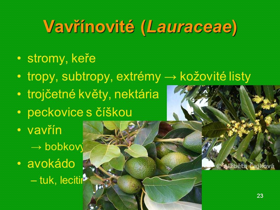 01 krytosemenné rostliny - systém2301 krytosemenné rostliny - systém23 Vavřínovité (Lauraceae) stromy, keře tropy, subtropy, extrémy → kožovité listy